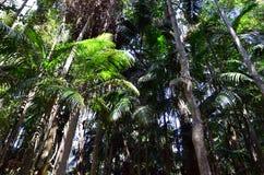 Montagem Tamborine Gold Coast Queensland Austrália Fotografia de Stock