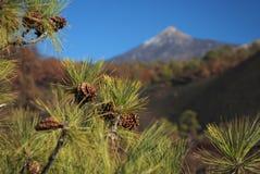 Montagem Teide o vulcão em Tenerife Fotografia de Stock Royalty Free