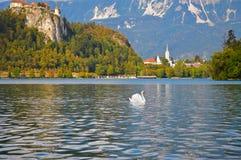 Montagens do esloveno, lago sangrado Imagens de Stock Royalty Free