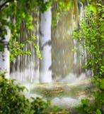 Montaggio mistico della foto del fondo di bella estate con una betulla Fotografia Stock