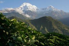 Montagna Annapurna Nepal della neve Immagini Stock Libere da Diritti