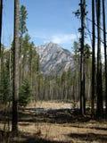 Montagna attraverso gli alberi Fotografie Stock