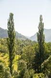 Montagna bagnata sul confine della Serbia e della Bosnia Fotografia Stock Libera da Diritti