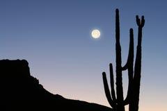Montagna, cactus e luna Fotografia Stock