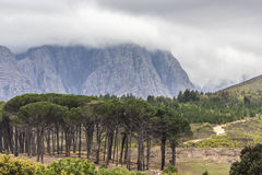 Montagna con gli alberi Immagini Stock Libere da Diritti