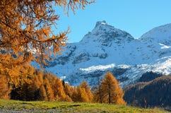 Montagna con i colori di autunno, la valle d'Aosta, Italia di Snowy Fotografia Stock Libera da Diritti