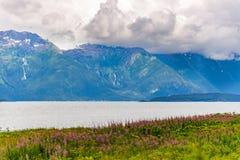 Montagna con i fiori dell'epilobio della priorità alta ed il cielo nuvoloso Alaska fotografia stock libera da diritti