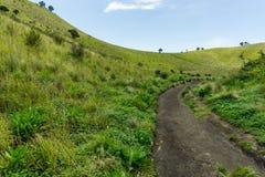 Montagna con l'albero di erba ed il fondo del cielo Fotografia Stock