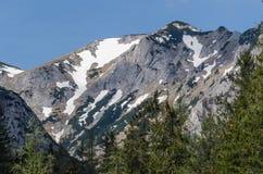 montagna con neve e gli alberi Immagine Stock Libera da Diritti