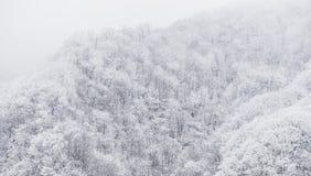 Montagna congelata di inverno Immagine Stock