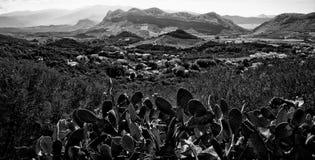 Montagna del cactus Fotografia Stock