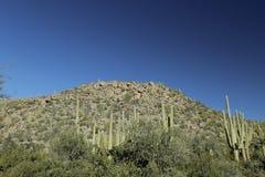 Montagna del deserto con i cactus in Arizona Fotografia Stock Libera da Diritti