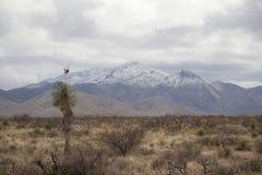Montagna del deserto con neve Immagine Stock