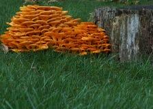 Montagna del fungo Fotografia Stock