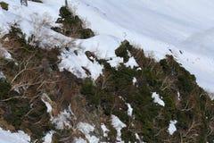 Montagna del Giappone con la neve di inverno Immagini Stock Libere da Diritti