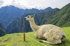 Montagna del Perù Fotografia Stock