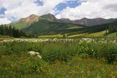 montagna del prato Fotografie Stock Libere da Diritti