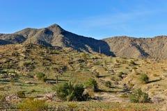 Montagna del sud in Arizona Fotografia Stock Libera da Diritti