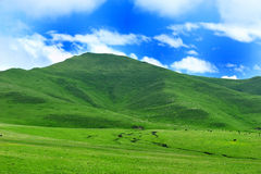 Montagna del Tibet GanNan Fotografie Stock