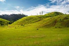 Montagna dell'erba Fotografia Stock Libera da Diritti
