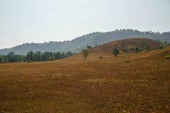 Montagna dell'erba asciutta Immagine Stock