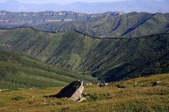 Montagna della foresta del pino Fotografie Stock Libere da Diritti