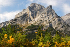montagna della foresta rocciosa Immagini Stock Libere da Diritti