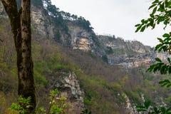 montagna della foresta rocciosa Fotografia Stock