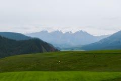 Montagna della neve con il bestiame Immagini Stock Libere da Diritti
