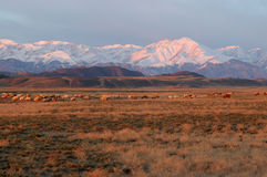 Montagna della neve nell'alba Fotografia Stock Libera da Diritti
