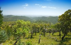 Montagna della quercia di sughero Fotografia Stock