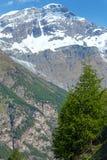 Montagna delle alpi di estate Fotografia Stock