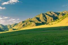 Montagna di Altai di estate Immagine Stock