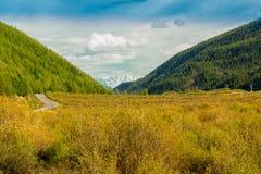 Montagna di Altai di estate Immagine Stock Libera da Diritti
