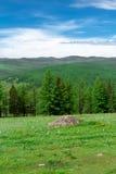 Montagna di Altai di estate Immagini Stock Libere da Diritti