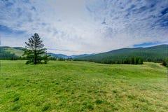 Montagna di Altai di estate Fotografia Stock
