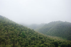 Montagna di bambù Immagine Stock Libera da Diritti