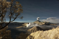 Montagna di Bromo con l'albero del ramo e il foregro delle piante Immagini Stock Libere da Diritti