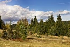 Montagna di Cesalpina in Serbia fotografia stock libera da diritti