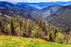 Montagna di Feldberg in primavera Fotografia Stock Libera da Diritti