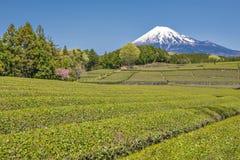 Montagna di Fuji e piantagione di tè a Shizuoka, Giappone Immagini Stock