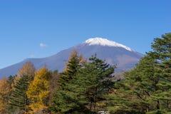 Montagna di Fuji sotto cielo blu con il pino come priorità alta Immagine Stock