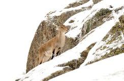 Montagna di Gredos Immagini Stock