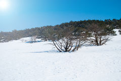 Montagna di Hallasan all'isola Corea di Jeju nell'inverno Fotografie Stock