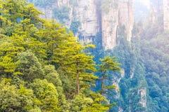 Montagna di hallelujah a Zhangjiajia Forest Park nazionale, Wulingyuan, Hunan, porcellana fotografia stock libera da diritti