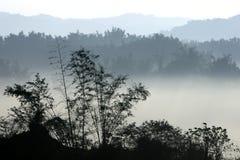 Montagna di mattina con nebbia e gli alberi fotografia stock libera da diritti