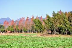 Montagna di Qiyun Fotografia Stock