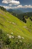 Montagna di Sauk, Washington, U.S.A. Immagini Stock