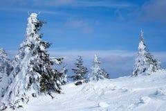 Montagna di Snowy con gli abeti nell'orario invernale Fotografia Stock