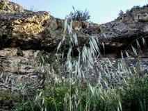 Montagna di Sulaiman-Too fotografia stock libera da diritti